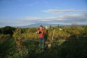 Tim in wijngaard